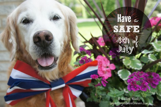 Have A Safe Fourth of July w/ Your PET