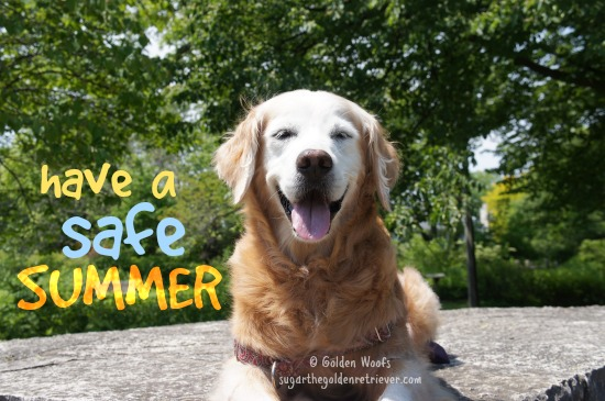 Have A Safe Summer with Your DOG