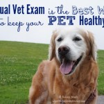Importance of Annual Vet Exam