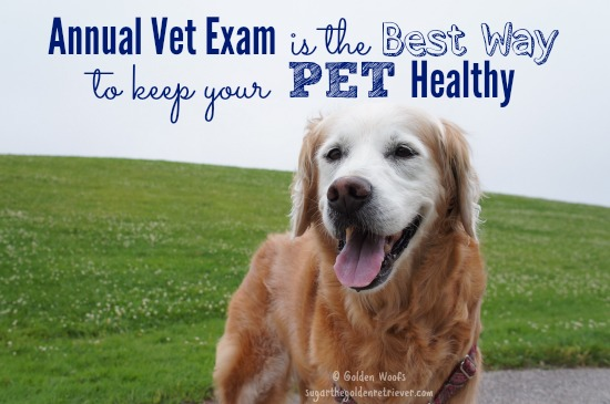 Annual Vet Exam Best Way Pet Healthy