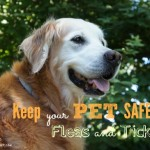 Keep Your Pet Safe from Fleas and Ticks