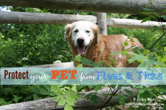 Protect Your PET from Fleas and Ticks