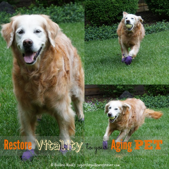 Restore Vitality to your Aging Pet