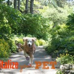 Revitalize Your Pet: Revitamal