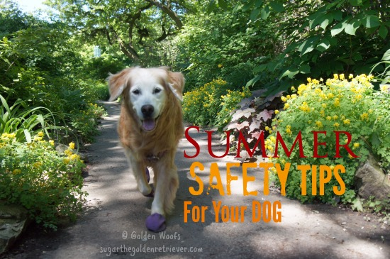 Summer Safety Tips For Your Dog