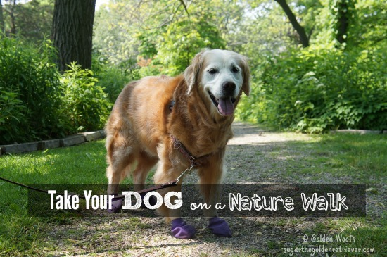 Take Your Dog on a Nature Walk