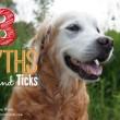 3 MYTHS: Flea and Ticks