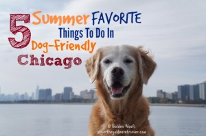 5 Summer Favorite Things To Do In Dog-Friendly Chicago