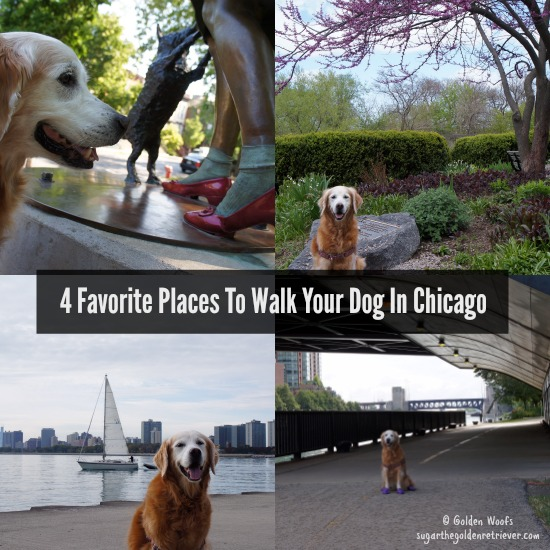 CHICAGO_FavoritePlaces_WalkYourDog