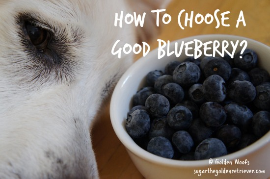 How To Choose a Good Blueberry?