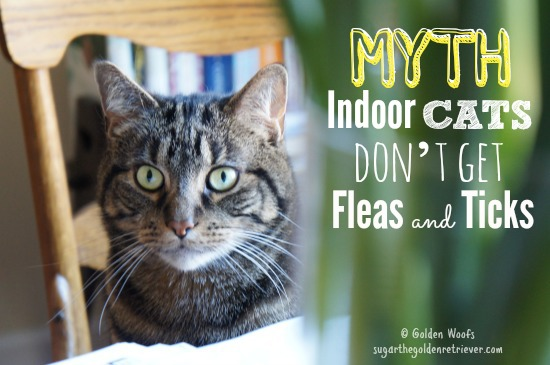 MYTH: Indoor CATS Don't Get Fleas and Ticks