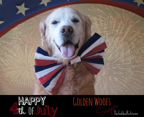 HAPPY 4th of July Sugar The Golden Retriever