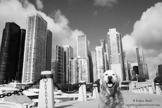 Cruising the City CHICAGO canine cruise