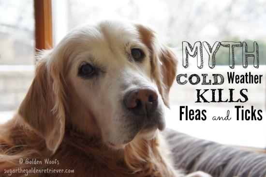 Myth Cold Weather Fleas and Ticks