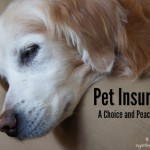 Pet Insurance: Funding Veterinary Care