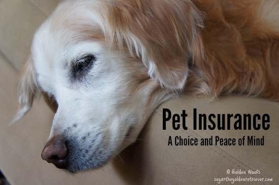 Pet Insurance:  Funding Veterinary Care
