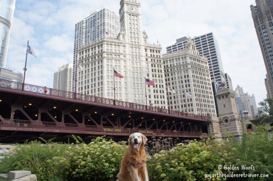 Sugar_WrigleyBldg_Chicago