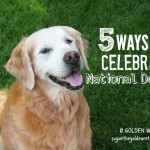 5 Way to Celebrate national Dog Day