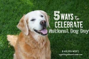 5 Way to Celebrate national Dog Day