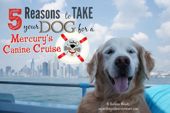 5 Reasons to Take Your Dog: Mercury Canine Cruise