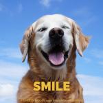 Golden Retriever SMILE