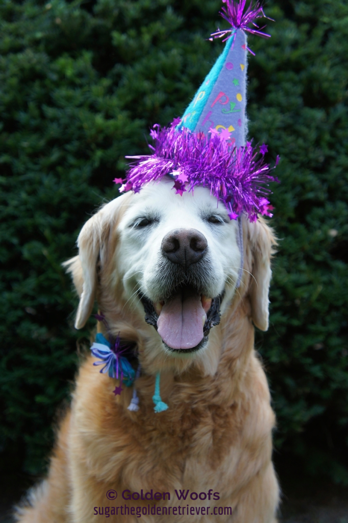 Smile Sugar S 13th Barkday Pawty Hop Golden Woofs
