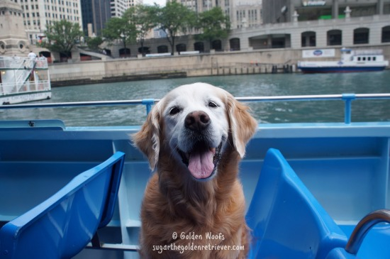 Take Your Dog On A Canine Cruise