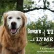 Beware of Ticks and Lyme Disease