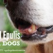 Epulis In Dogs