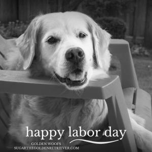 Golden Retriever Happy Labor Day