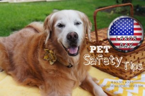 Labor Day Pet Safety Tips