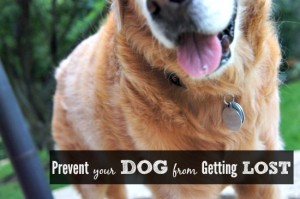 Safety Tips For Your Dog Being Lost