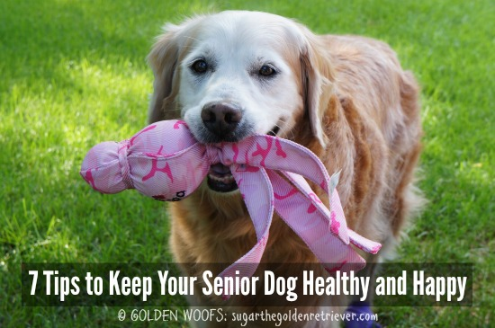 7 Tips to Keep Your Senior DOG Healthy and Happy
