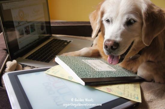 Golden Woofs Writing Process