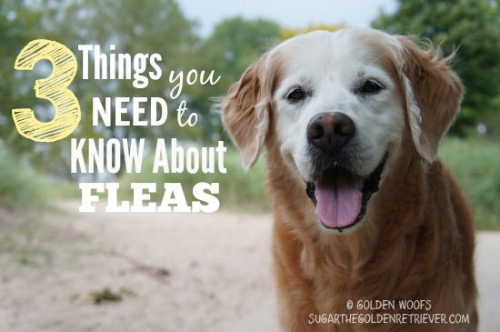 3 Things You Need To Know About FLEAS