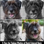5 TIPS for Taking Photos of Dark Colored Dogs