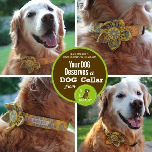 Handmade Dog Collar B.W. Barkery