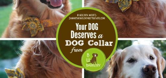 Your Dog Deserves A B.W. Barkery Dog Collar