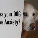ThunderShirt for Dog Anxiety