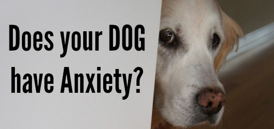 ThunderShirt Natural Remedy To Alleviate Dog's Anxiety