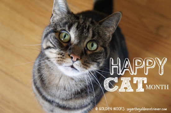 September: Happy CAT Month