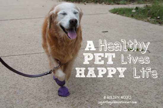 Healthy Pet Happy Life