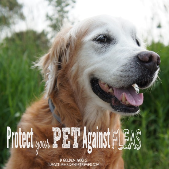 Protect Your PET Against FLEAS