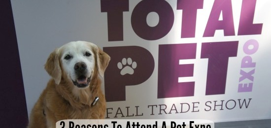 3 Reasons Why A Blogger Attends A Pet Expo