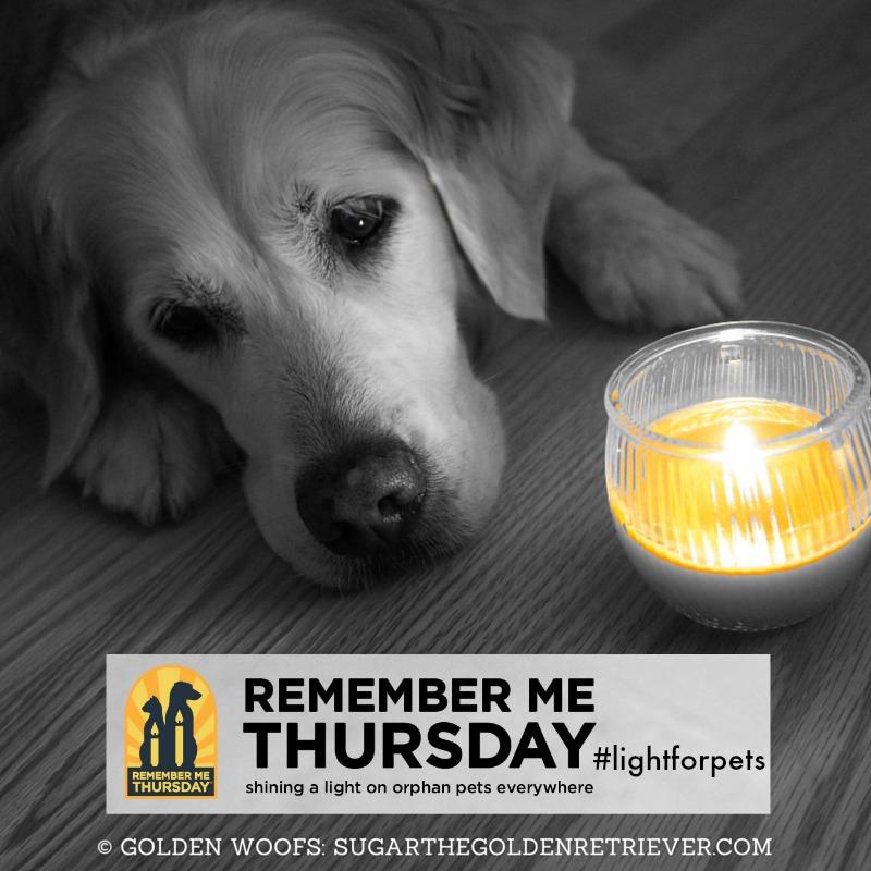 Remember Me Thursday #LightForPets