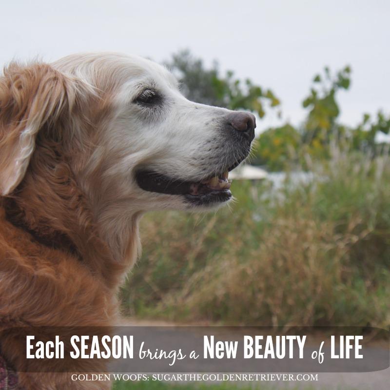 Season Change Brings New Beauty