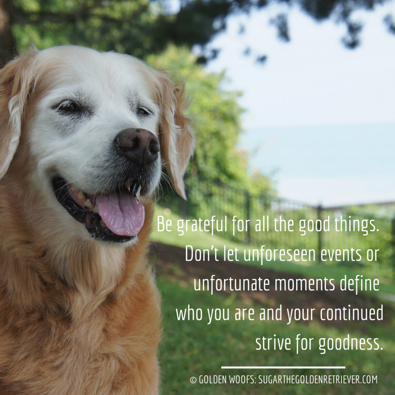 Thankful Quote Golden Woofs