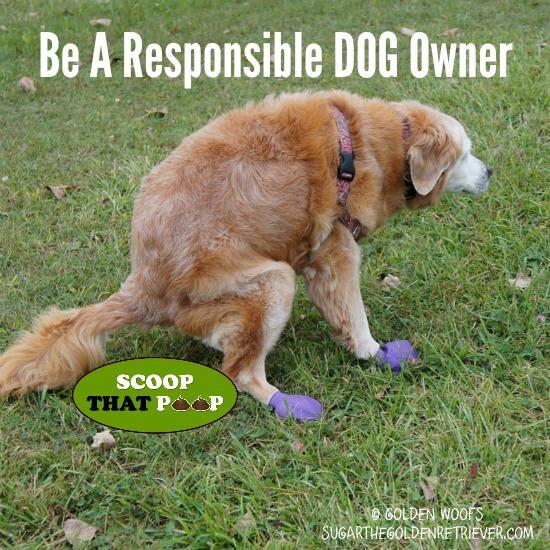 Be A Responsible Dog Owner #scoopthatpoop