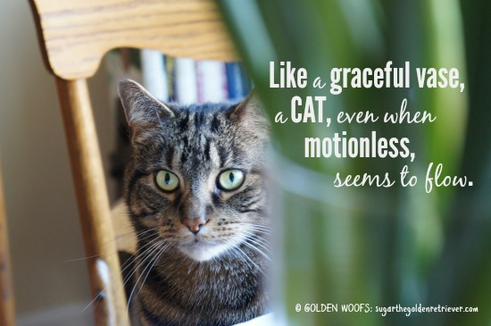 Quote: Cat Like A Graceful Vase