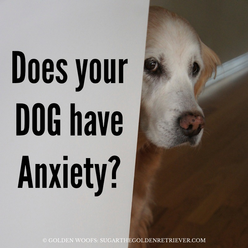 Does Your Dog Have Anxiety?